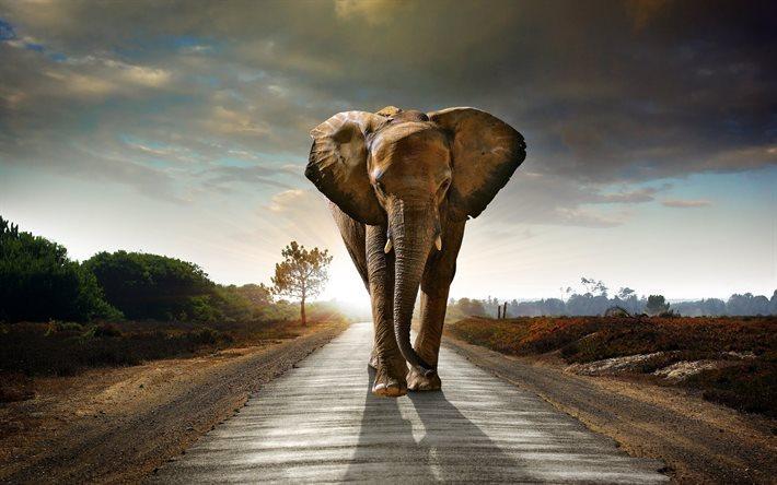 Partnersuche kostenlos afrika