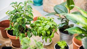 Почему комнатные растения неочищают воздух