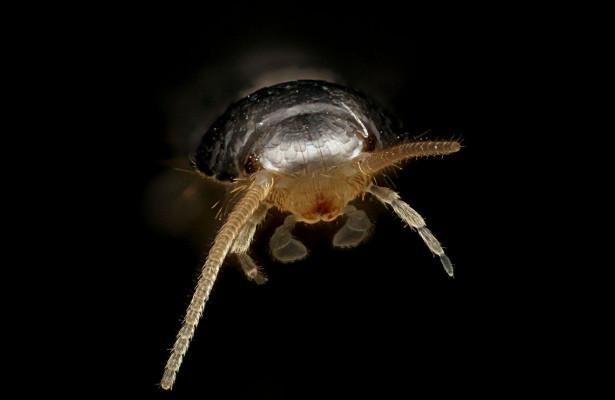 Эволюцию насекомых связали соспособностью определять запахи
