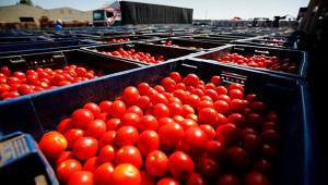 Казахстан пообещал ответить наограничения Москвы наввоз томатов