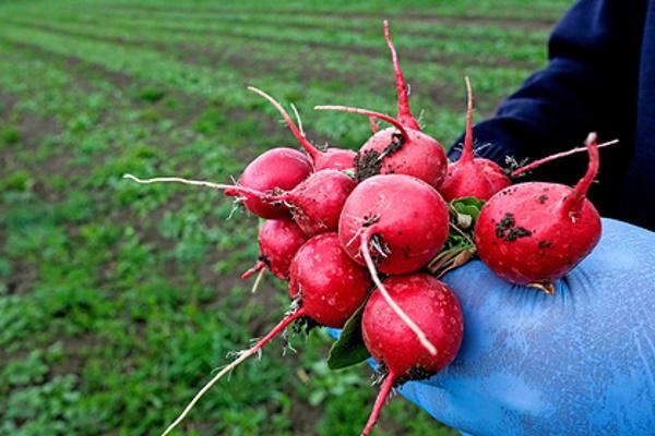 Красноярских фермеров поддержали миллионами рублей