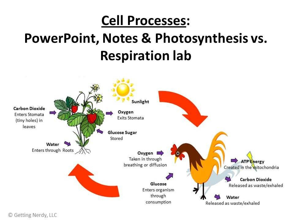 Essay on photosynthesis process