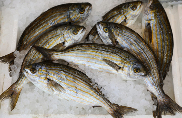 Чтовыбрать, рыбу илитаблетки?