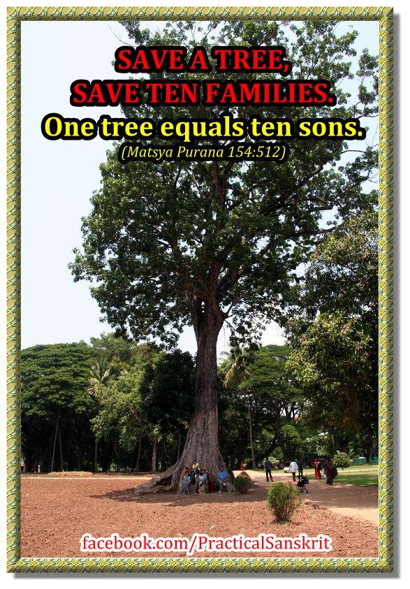 Saving trees essay - hydrocreditunioncom