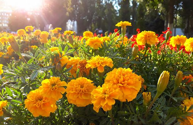 Карнавал иконкурс налучший костюм: фестиваль цветов вернули вСтруковский сад