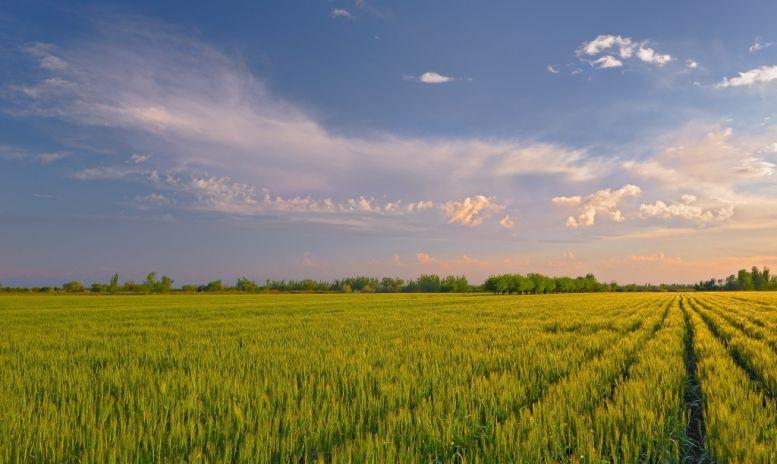 Землю в Козани для сельского хозяйства