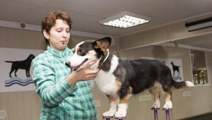 Ученые предупредили онеобходимости вакцинации животных