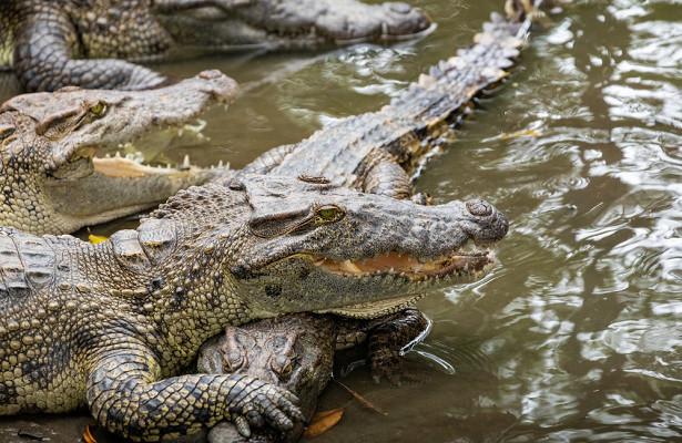 Рыбак триминуты боролся спойманным крокодилом