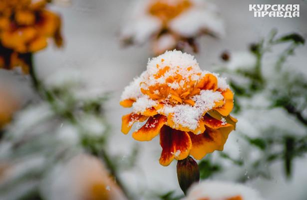 ВКурской области ожидаются дожди имокрый снег