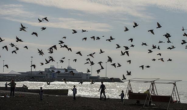 ВСочи считают, чтоотток туристов после открытия Турции можно удержать