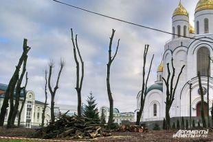 Обрезку деревьев ухрама вКалининграде провели снарушением— мэрия