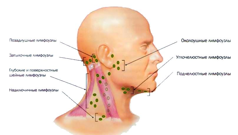 Болит голова над ухом у ребенка - Болит голова у ребенка