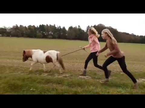 Pferde bekanntschaften