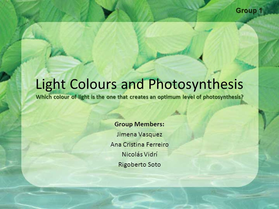 Photosynthesis research paper