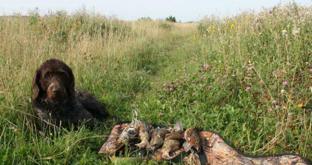 ВКировской области открыт сезон охоты наболотно-луговую дичь