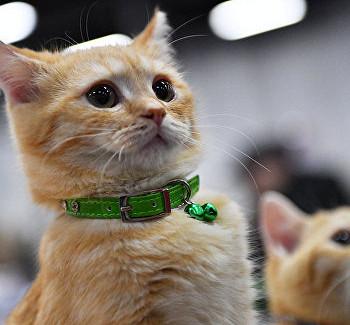 Коты Конотопа стали ближе кЕвропе