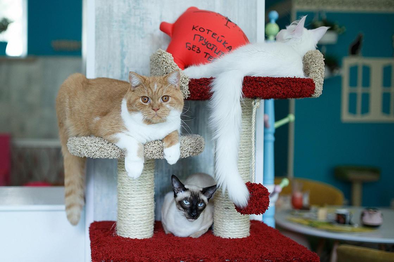 Ресторан Kotomania Cats & Relax Club - фотография 9