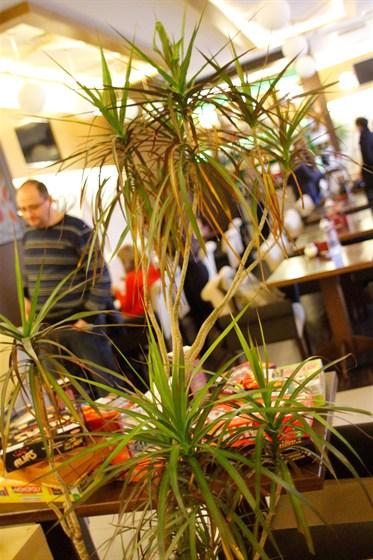 Ресторан Эссе - фотография 9
