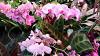 VII Фестиваль орхидей, хищных растений и растений пустынь «Тропическая зима»