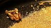 Среда обитания. «Золотая лихорадка»