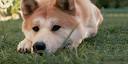 Явная жизнь домашних животных: лучшие звери в кино и сериалах
