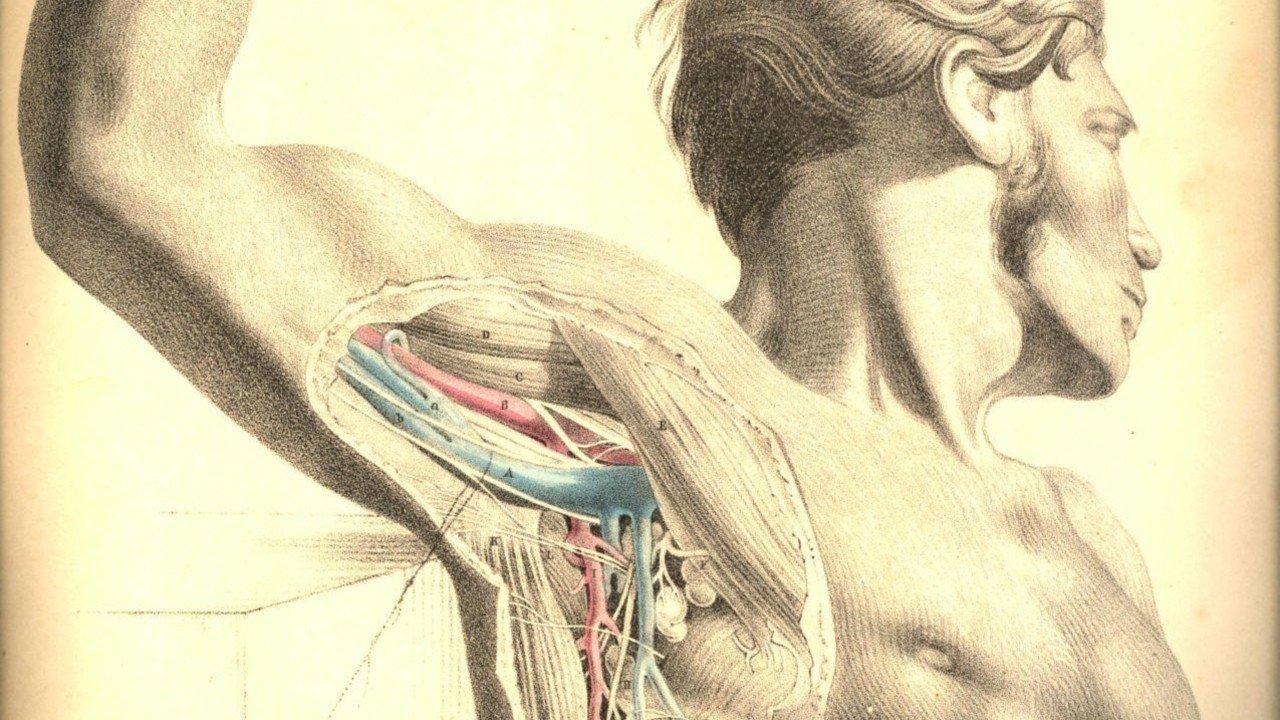 Анатомия-2 смотреть фото