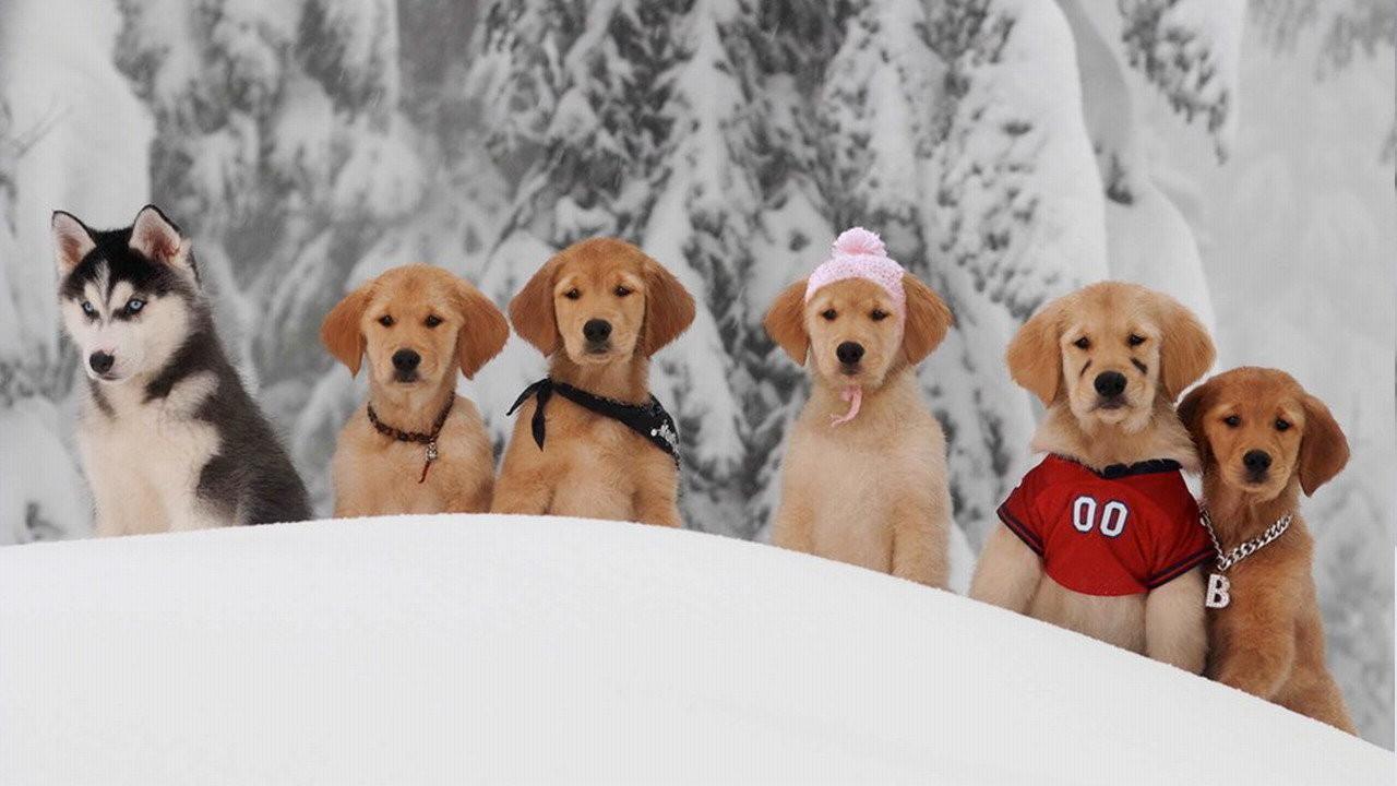 Снежная пятерка смотреть фото