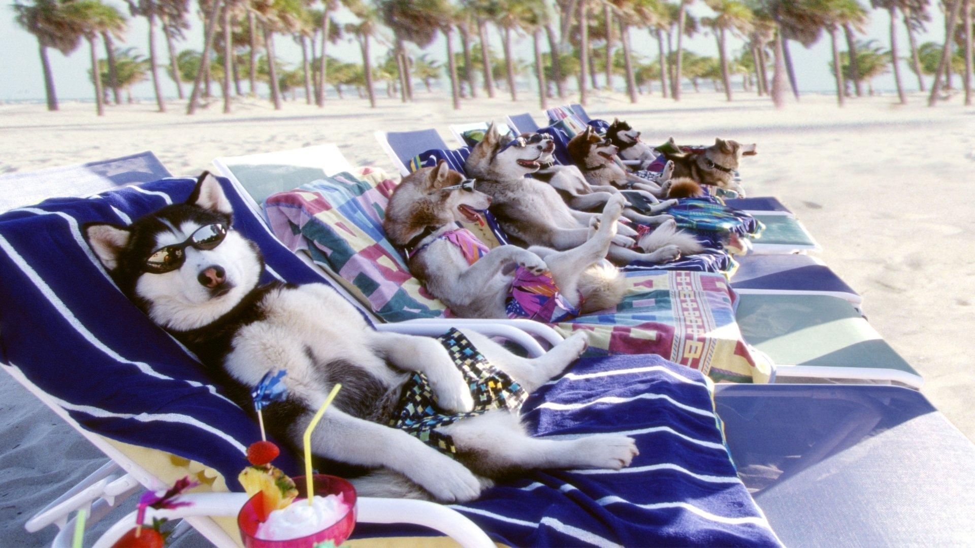 Снежные псы смотреть фото