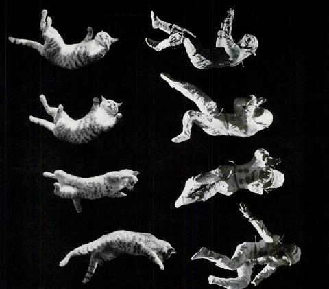 Как рассказывает «Политех», в 1960-х годах стэнфордский профессор Томас Кейн выяснил, как кошкам удается всегда ловко приземляться на четыре ноги. Его исследования взяли на вооружение в NASA