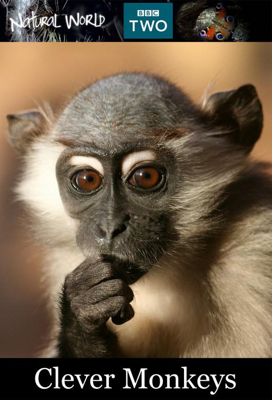 Умные обезьяны (Clever Monkeys)