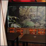 Ресторан Zebra - фотография 4