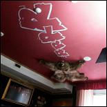 Ресторан Жаба душит - фотография 3