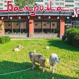 Ресторан Бахрома №1 - фотография 5