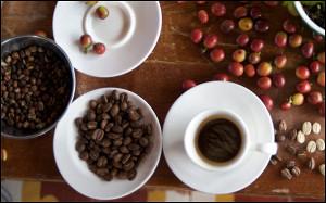 Все о хорошем дорогом кофе: specialty и контроль происхождения продукта