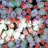 Во имя розы