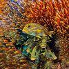 Фестиваль дикой природы «Золотая черепаха-2016»