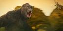 «Конг: Остров черепа»: новая большая обезьяна — почему это весело