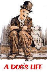 Постер Собачья жизнь