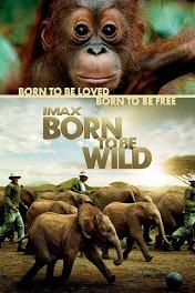 Рожденные на воле 3D / Born to Be Wild