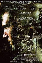 Паук / Spider