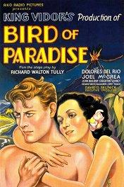 Райская птичка / Bird of Paradise