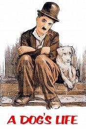 Собачья жизнь / A Dog's Life