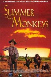 Неприятности с обезьянками / Summer of the Monkeys