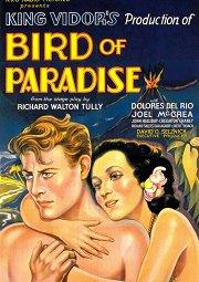 Постер Райская птичка