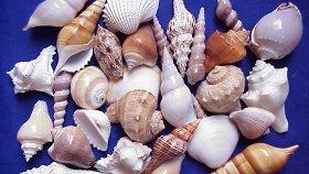 Коллекция раковин морских моллюсков