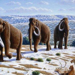 Мир древних животных Александра Кноблоха