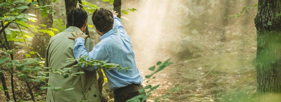 Кино: «Море деревьев»