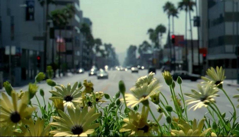 Кино: «Адаптация»