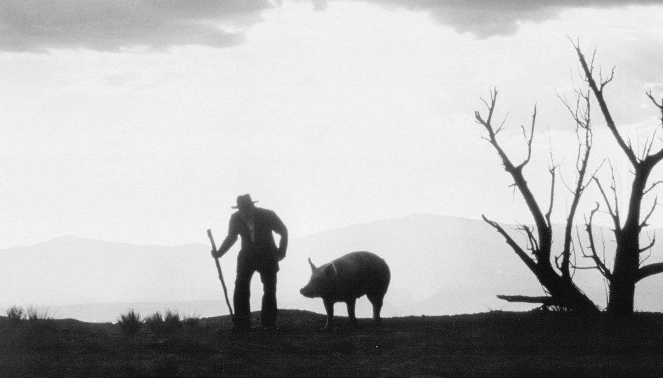 Кино: «Война на бобовом поле Милагро»