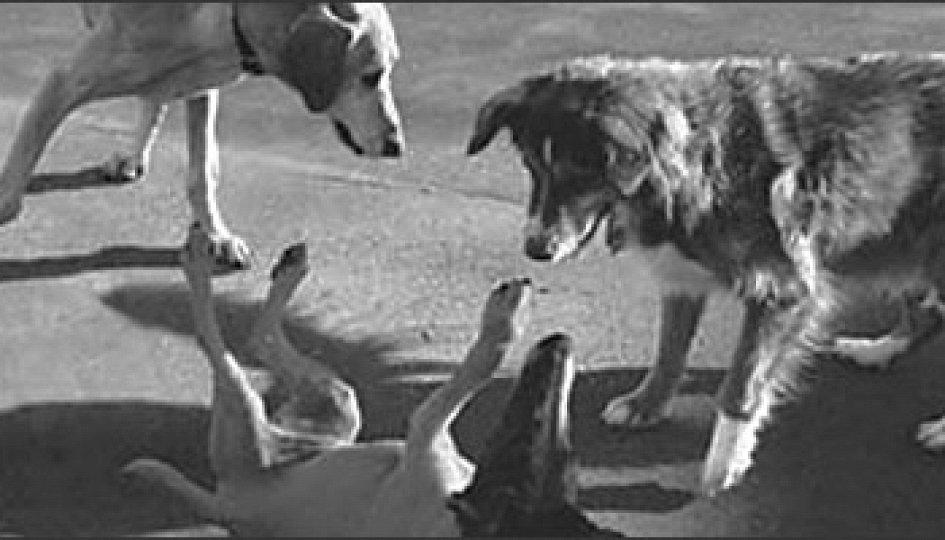 Кино: «Собачья жизнь»